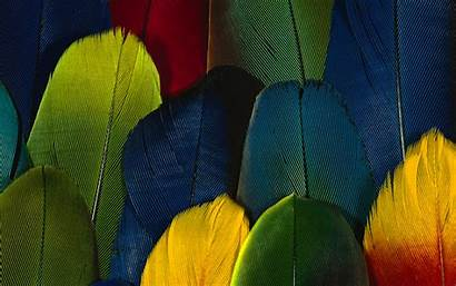 Feather Definition Colorful Parrot Abstract Wallpapers Feathers