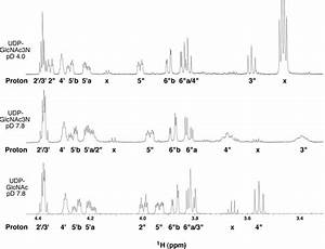 Partial one-dimensional 1 H NMR spectra of UDP-GlcNAc and ...