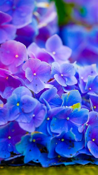 Samsung Galaxy Note Flower Wallpapers Power Android