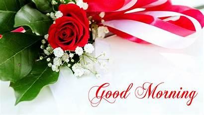 Morning Rose Flower Flowers Wallpapers Gm Coffee