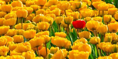 Unique Image Unique Concept Free Stock Photo Domain Pictures