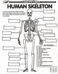 Skeletal System Worksheet Pdf Answers