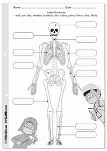 Label Me Printable - Bones  Skeleton