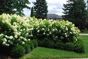 Hortensien Schneiden Video : wann werden hortensien geschnitten retina ~ Lizthompson.info Haus und Dekorationen