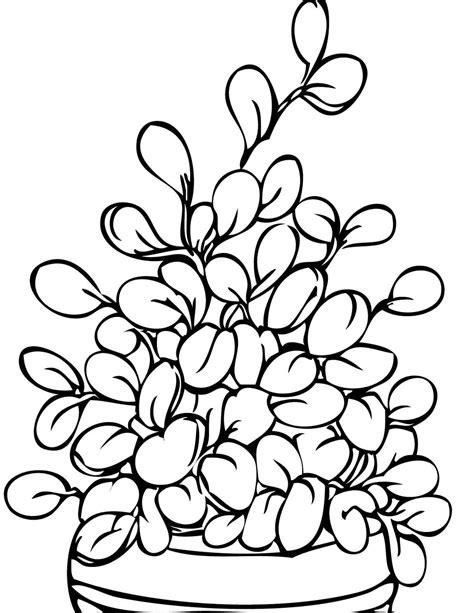 plant coloring pages colorir e pintar lindos desenhos de plantas arvores e flores