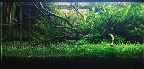 Planted Aquascape by Aquascaping Basics For The Planted Tank Biotope One