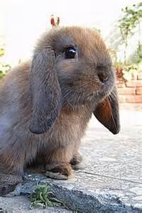 Cute Baby Animals Bunny