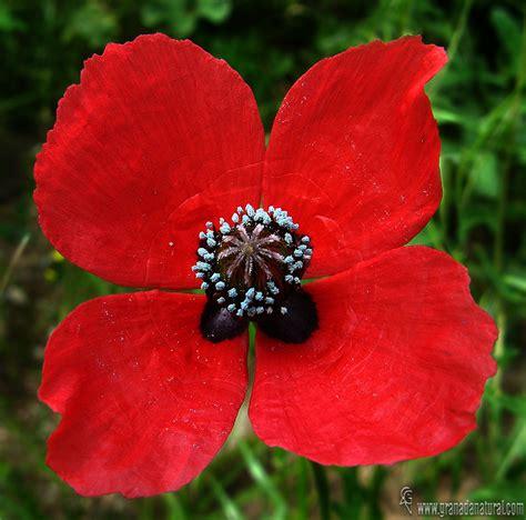 http://www.granadanatural.com/ficha_flora.php?cod=196