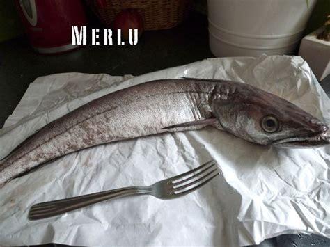comment cuisiner le colin merlu au court bouillon