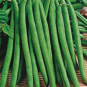 Dwarf Bean Baritone Seeds From Mr Fothergill U0026 39 S Seeds And