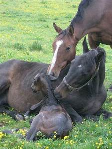 New baby foal | More horses | Pinterest