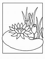 Lily Coloring Pages Flower Water Pad Lilies Drawing Flowers Frog Line Cartoon Printable Colouring Pads Adult Drawings Clipart Pond Jr sketch template