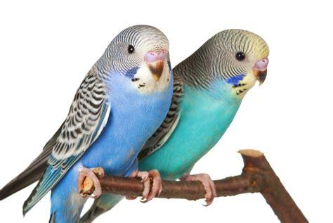 pet parrot pet birds weneedfun