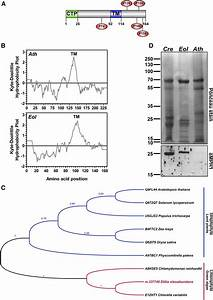 Membrane Proteomic Insights into the Physiology and ...