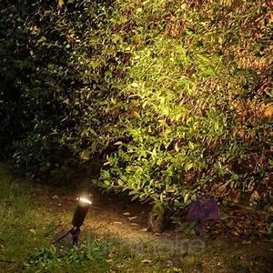 quel eclairage exterieur pour embellir plantes arbustes With eclairage exterieur pour arbre