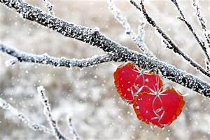 Winter Forest Hearts - Winter & Nature Background ...