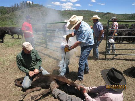 Ranch Branding Calf