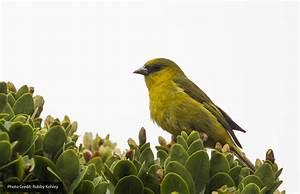 "Department of Land and Natural Resources | 03/14/18 – ""Save A Bird–Swat A ...  Bird"