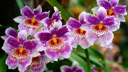 Desktop Flowers Nature Background Wallpapers Flower Orchids