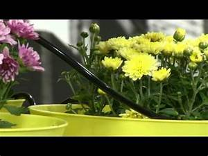 Blumen Im Urlaub Bewässern : automatisch blumen gie en doovi ~ Watch28wear.com Haus und Dekorationen