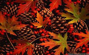 Fall Leaves Widescreen Background Wallpapers 3917 ...