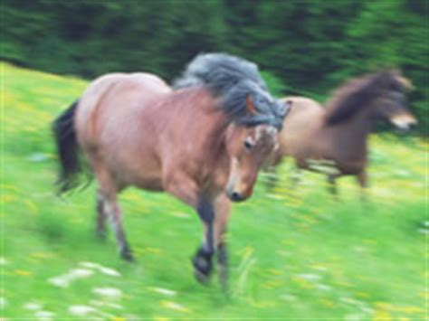 pferd ems equines metabolisches syndrom
