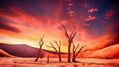 Desert Sunset Dried Landscape Trees Picstatio