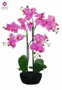 Orchideen Ohne Topf : k nstliche orchidee im topf pink 62 cm ~ Eleganceandgraceweddings.com Haus und Dekorationen