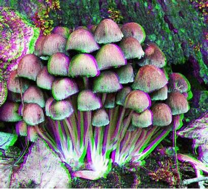 Hongos Mushrooms Yay Anaglyph Mushroom Drugs Semaj