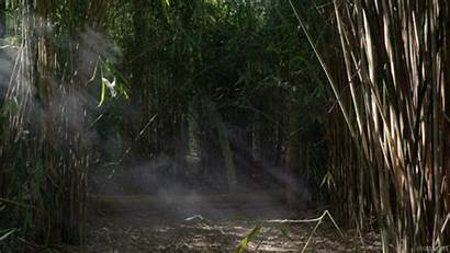 Bamboo Forest Giphy Living Jungle Smoke Stills