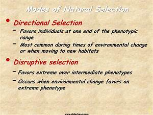 Disruptive Selection Microevolution Of Species