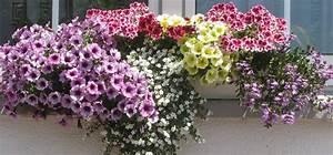 Blumenkästen Bepflanzen Ideen : balkon blumenk sten bepflanzen google suche balkon ~ A.2002-acura-tl-radio.info Haus und Dekorationen