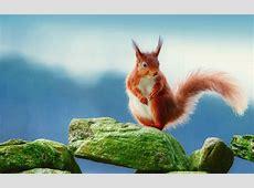 Eichhörnchen Full HD Wallpaper and Hintergrund 2560x1600