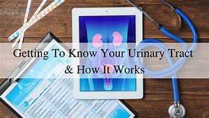 Getting To Know Your Urinary Tract