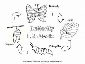 Homeschooling Adventures     Butterfly Ideas