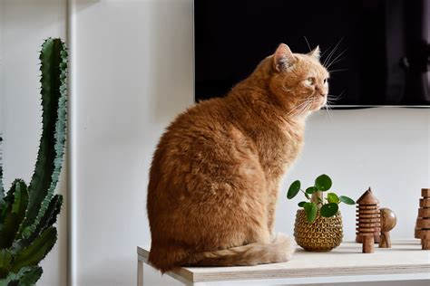 Pflanzen Für Wohnung by Katzen Und Pflanzen In Einer Wohnung Geht Das 252 Berhaupt
