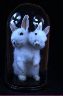 Two-Headed Bunny Taxidermy