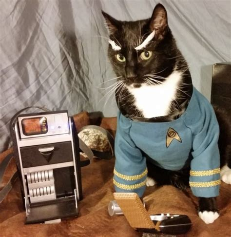 collection  cat cosplay   cats meow