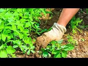Come eliminare le erbacce nell'orto – buzzpls Com