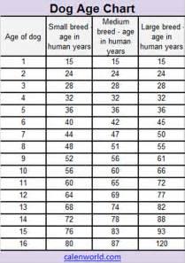 cat year conversion age calendar age chart age converter