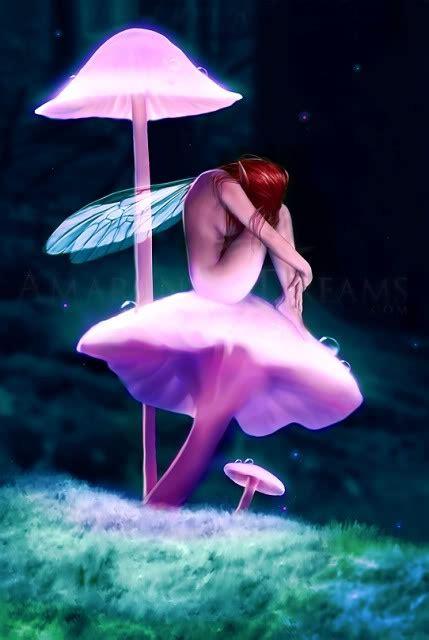 mushroom meditation fairy artwork fairy pictures faery art