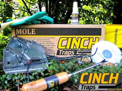 cinch mole traps small mole trap deluxe kit cinch traps 2206