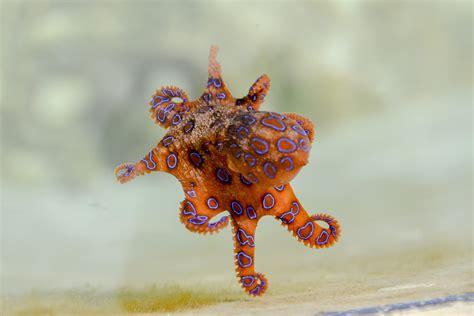 Top 10 Most Terrifying Deep Sea Creatures