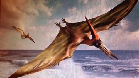 Real Pterodactyl Like Creature Flying Off The Coast Of