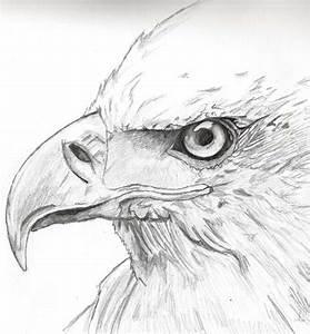 Eagle Eye by Dart07 on DeviantArt