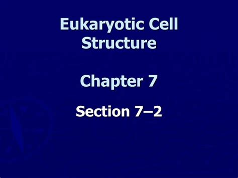 section 7 2 eukaryotic cell structure ppt eukaryotic cell structure chapter 7 powerpoint
