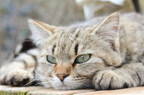 cat cats better dogs than why reasons dog cheatsheet lying down