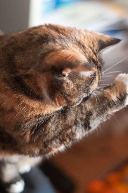 how much does it cost to declaw a cat at petco