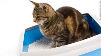 cat pooping is cat dangerous cnn