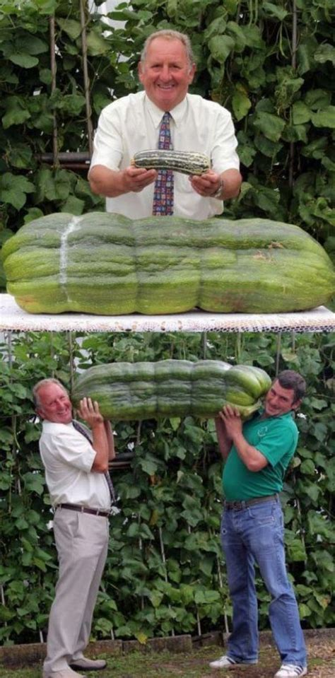 Big Cucumber ? 1Funny.com
